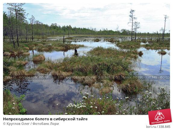 Непроходимое болото в сибирской тайге, фото № 338845, снято 19 июня 2008 г. (c) Круглов Олег / Фотобанк Лори