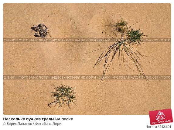 Несколько пучков травы на песке, фото № 242601, снято 29 марта 2008 г. (c) Борис Панасюк / Фотобанк Лори