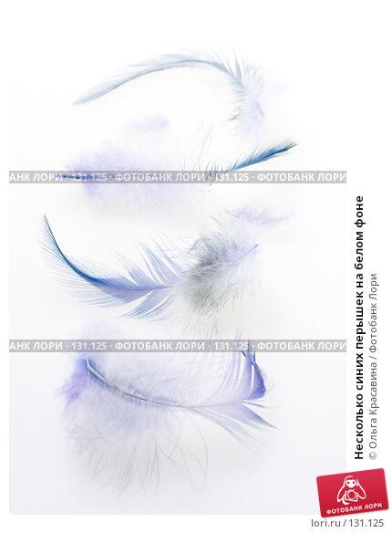 Несколько синих перышек на белом фоне, фото № 131125, снято 17 октября 2007 г. (c) Ольга Красавина / Фотобанк Лори