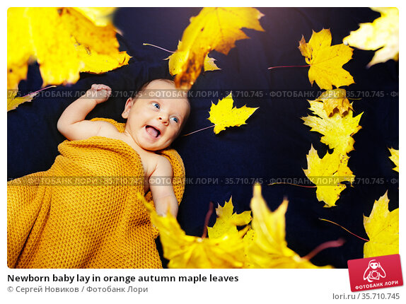Newborn baby lay in orange autumn maple leaves. Стоковое фото, фотограф Сергей Новиков / Фотобанк Лори