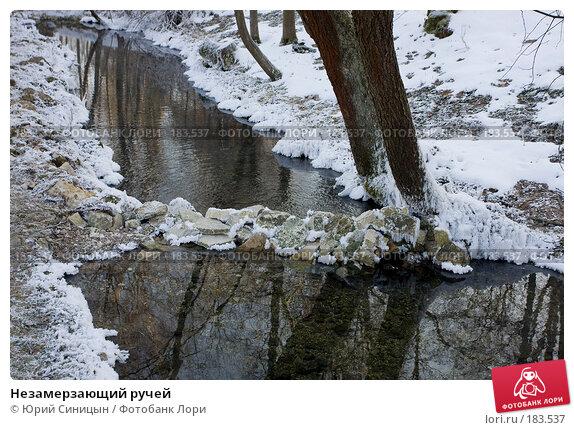 Незамерзающий ручей, фото № 183537, снято 8 января 2008 г. (c) Юрий Синицын / Фотобанк Лори