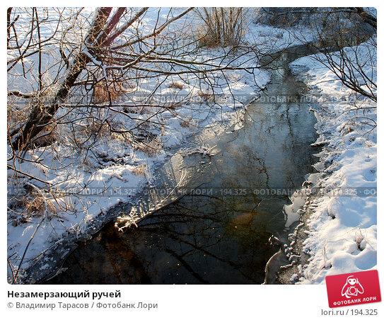 Незамерзающий ручей, фото № 194325, снято 4 января 2008 г. (c) Владимир Тарасов / Фотобанк Лори