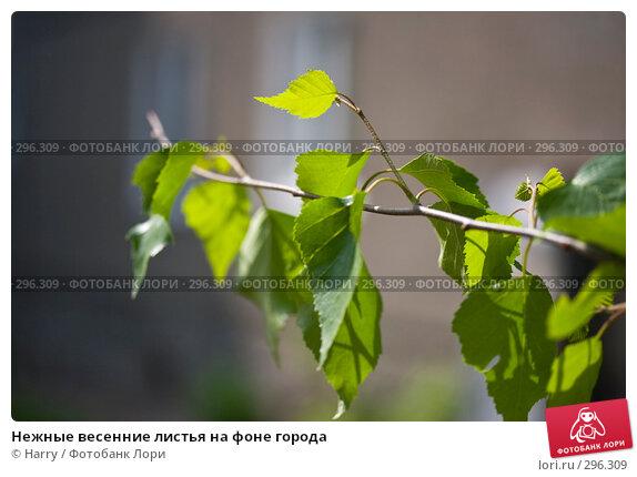 Купить «Нежные весенние листья на фоне города», фото № 296309, снято 20 мая 2008 г. (c) Harry / Фотобанк Лори