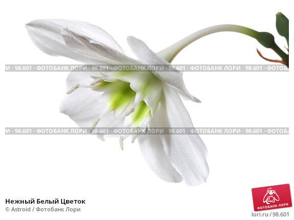 Нежный Белый Цветок, фото № 98601, снято 28 апреля 2007 г. (c) Astroid / Фотобанк Лори