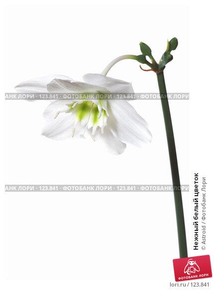Нежный белый цветок, фото № 123841, снято 28 апреля 2007 г. (c) Astroid / Фотобанк Лори