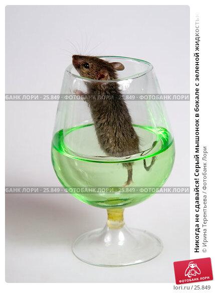 Купить «Никогда не сдавайся! Серый мышонок в бокале с зеленой жидкостью», эксклюзивное фото № 25849, снято 18 марта 2007 г. (c) Ирина Терентьева / Фотобанк Лори