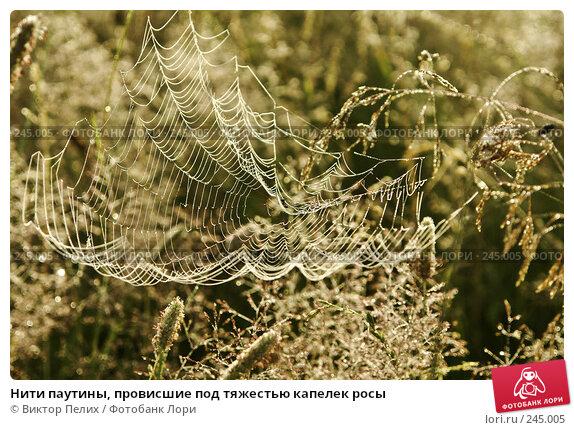 Нити паутины, провисшие под тяжестью капелек росы, фото № 245005, снято 24 февраля 2017 г. (c) Виктор Пелих / Фотобанк Лори