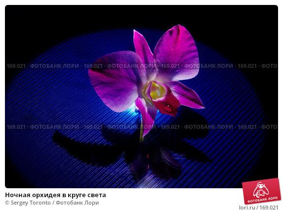 Ночная орхидея в круге света, фото № 169021, снято 5 января 2008 г. (c) Sergey Toronto / Фотобанк Лори