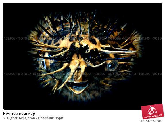 Ночной кошмар, фото № 158905, снято 17 декабря 2007 г. (c) Андрей Бурдюков / Фотобанк Лори