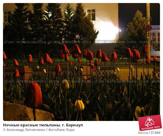 Ночные красные тюльпаны. г. Барнаул, фото № 37889, снято 22 мая 2017 г. (c) Александр Литовченко / Фотобанк Лори
