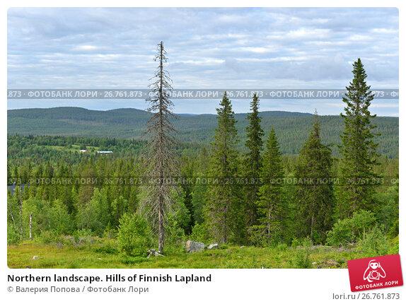 Купить «Northern landscape. Hills of Finnish Lapland», фото № 26761873, снято 22 июля 2017 г. (c) Валерия Попова / Фотобанк Лори