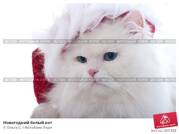 Новогодний белый кот, фото № 267829, снято 27 сентября 2007 г. (c) Ольга С. / Фотобанк Лори