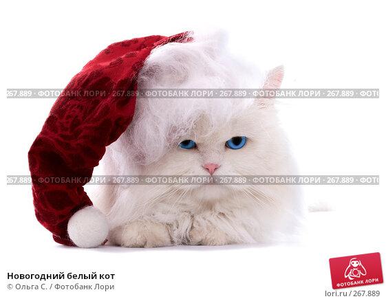 Новогодний белый кот, фото № 267889, снято 27 сентября 2007 г. (c) Ольга С. / Фотобанк Лори