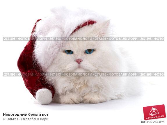 Новогодний белый кот, фото № 267893, снято 27 сентября 2007 г. (c) Ольга С. / Фотобанк Лори