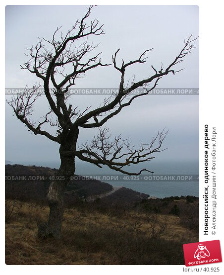Новороссийск, одинокое дерево, фото № 40925, снято 27 февраля 2005 г. (c) Александр Демшин / Фотобанк Лори