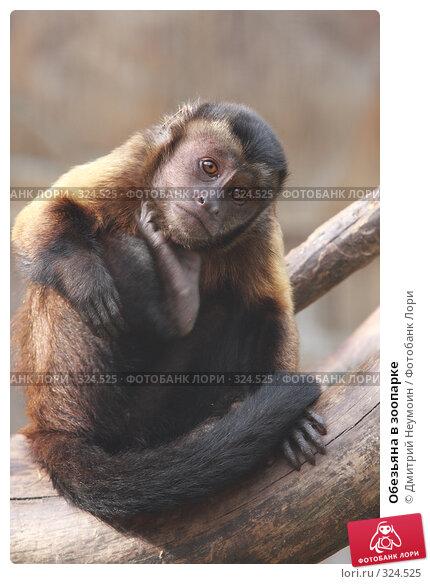 Купить «Обезьяна в зоопарке», эксклюзивное фото № 324525, снято 28 апреля 2008 г. (c) Дмитрий Неумоин / Фотобанк Лори