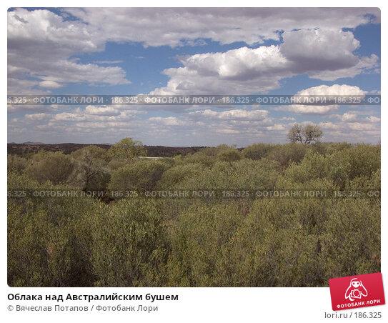 Облака над Австралийским бушем, фото № 186325, снято 13 октября 2006 г. (c) Вячеслав Потапов / Фотобанк Лори