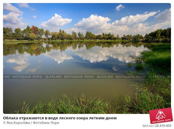 Купить «Облака отражаются в воде лесного озера летним днем», фото № 28419493, снято 15 сентября 2015 г. (c) Яна Королёва / Фотобанк Лори
