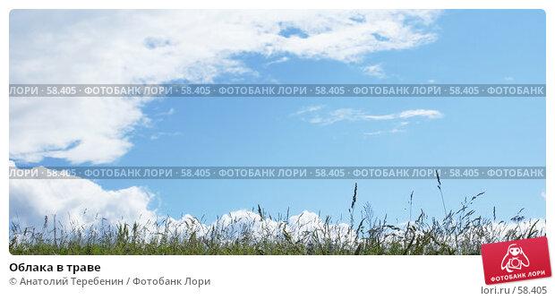 Облака в траве, фото № 58405, снято 20 июня 2007 г. (c) Анатолий Теребенин / Фотобанк Лори