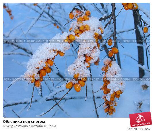 Облепиха под снегом, фото № 130057, снято 21 декабря 2005 г. (c) Serg Zastavkin / Фотобанк Лори