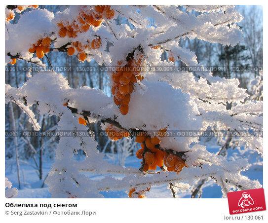 Облепиха под снегом, фото № 130061, снято 21 декабря 2005 г. (c) Serg Zastavkin / Фотобанк Лори
