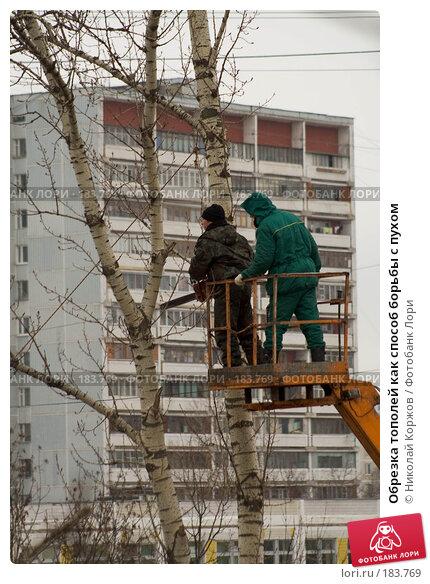 Обрезка тополей как способ борьбы с пухом, фото № 183769, снято 19 января 2008 г. (c) Николай Коржов / Фотобанк Лори