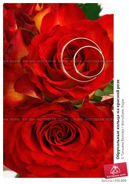 Купить «Обручальные кольца на красной розе», фото № 310009, снято 31 мая 2008 г. (c) Татьяна Белова / Фотобанк Лори