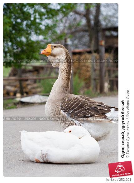 Один серый, другой белый, фото № 252201, снято 13 апреля 2008 г. (c) Галина Лукьяненко / Фотобанк Лори