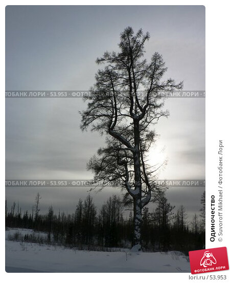 Одиночество, фото № 53953, снято 4 марта 2007 г. (c) Suvoroff Mikhael / Фотобанк Лори