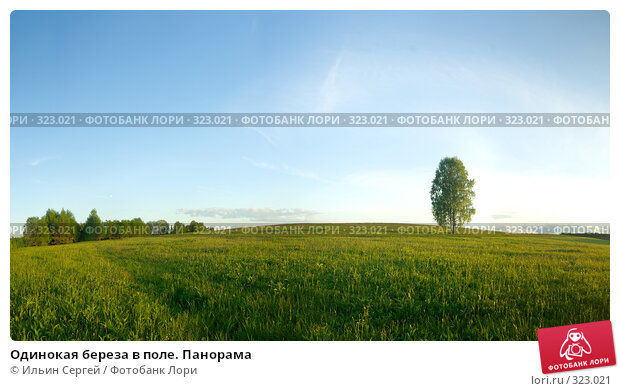 Одинокая береза в поле. Панорама, фото № 323021, снято 21 июля 2017 г. (c) Ильин Сергей / Фотобанк Лори