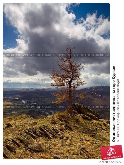 Одинокая лиственница на горе Куркак, фото № 229577, снято 5 мая 2007 г. (c) Евгений Прокофьев / Фотобанк Лори