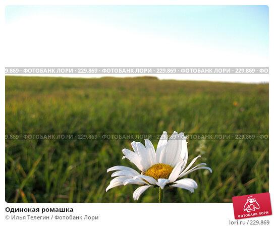 Одинокая ромашка, фото № 229869, снято 24 сентября 2007 г. (c) Илья Телегин / Фотобанк Лори