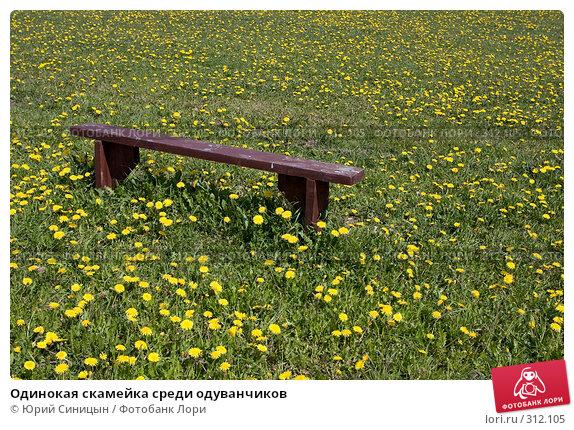 Одинокая скамейка среди одуванчиков, фото № 312105, снято 18 мая 2008 г. (c) Юрий Синицын / Фотобанк Лори