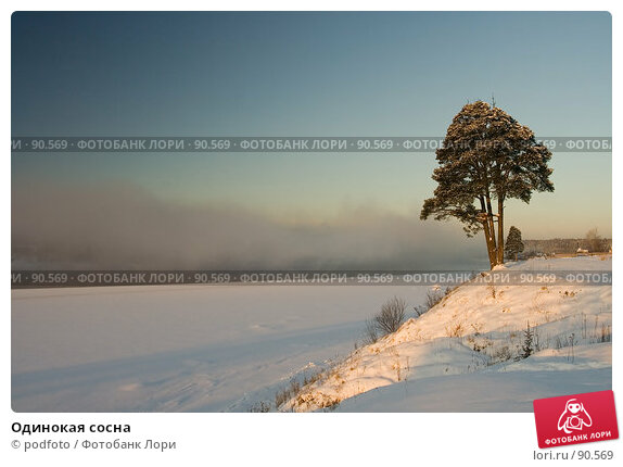 Купить «Одинокая сосна», фото № 90569, снято 4 февраля 2007 г. (c) podfoto / Фотобанк Лори
