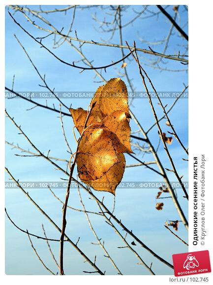 Одинокие осенние листья, фото № 102745, снято 26 июля 2017 г. (c) Круглов Олег / Фотобанк Лори