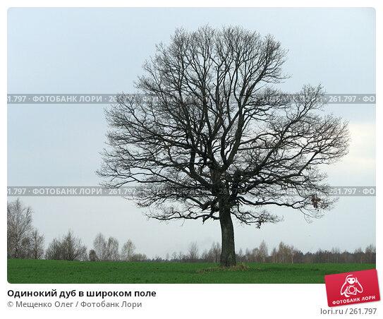 Одинокий дуб в широком поле, фото № 261797, снято 9 апреля 2008 г. (c) Мещенко Олег / Фотобанк Лори