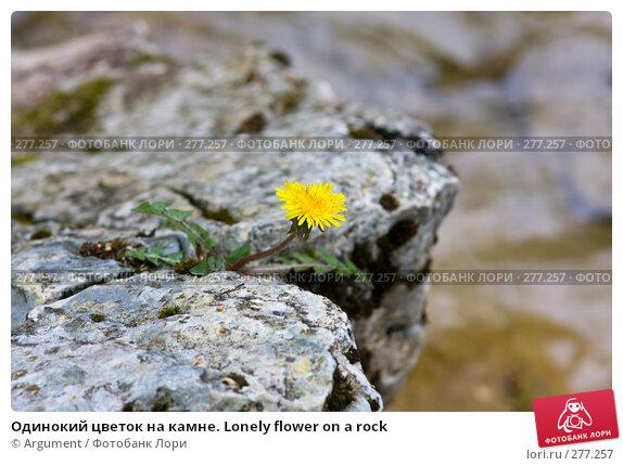 Одинокий цветок на камне. Lonely flower on a rock, фото № 277257, снято 27 апреля 2008 г. (c) Argument / Фотобанк Лори
