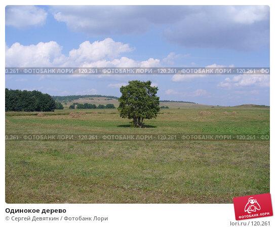 Одинокое дерево, фото № 120261, снято 24 августа 2007 г. (c) Сергей Девяткин / Фотобанк Лори