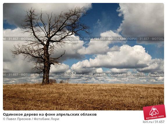 Одинокое дерево на фоне апрельских облаков, фото № 31657, снято 10 апреля 2007 г. (c) Павел Преснов / Фотобанк Лори