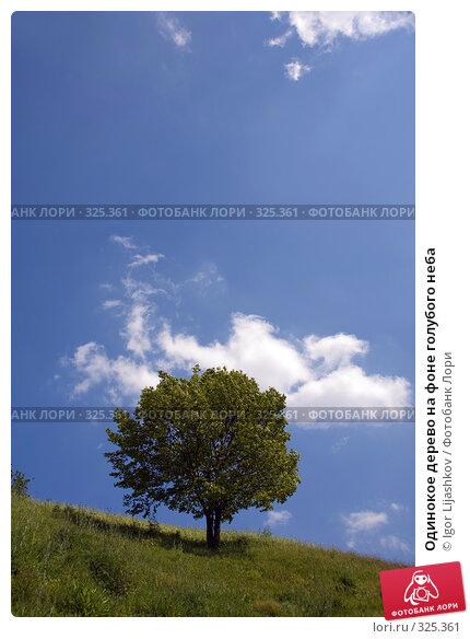 Одинокое дерево на фоне голубого неба, фото № 325361, снято 12 июня 2008 г. (c) Igor Lijashkov / Фотобанк Лори