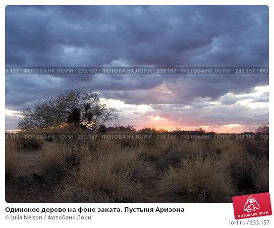 Одинокое дерево на фоне заката. Пустыня Аризона, фото № 233157, снято 20 февраля 2007 г. (c) Julia Nelson / Фотобанк Лори