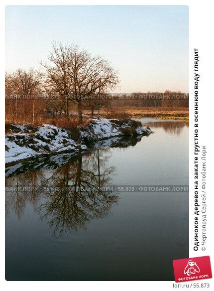 Купить «Одинокое дерево на закате грустно в осеннюю воду глядит», фото № 55873, снято 23 ноября 2017 г. (c) Чертопруд Сергей / Фотобанк Лори