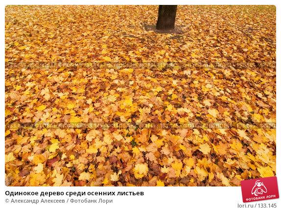 Одинокое дерево среди осенних листьев, эксклюзивное фото № 133145, снято 30 октября 2007 г. (c) Александр Алексеев / Фотобанк Лори