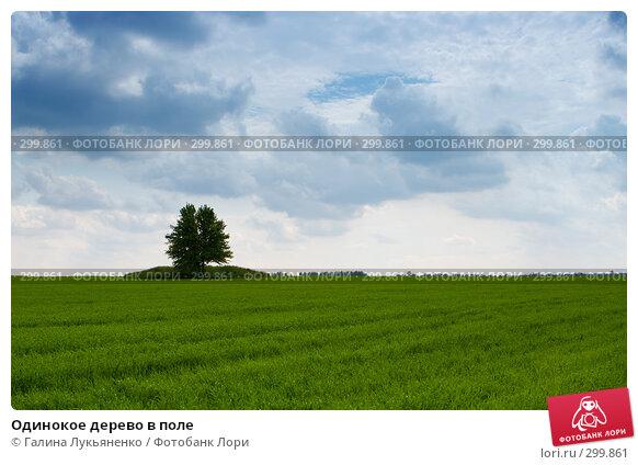 Купить «Одинокое дерево в поле», фото № 299861, снято 17 мая 2008 г. (c) Галина Лукьяненко / Фотобанк Лори