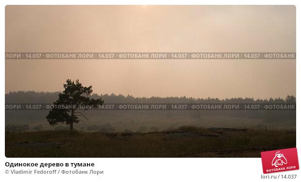 Купить «Одинокое дерево в тумане», фото № 14037, снято 13 июля 2006 г. (c) Vladimir Fedoroff / Фотобанк Лори