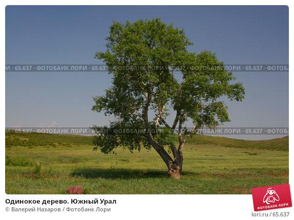 Одинокое дерево. Южный Урал, фото № 65637, снято 30 мая 2007 г. (c) Валерий Назаров / Фотобанк Лори