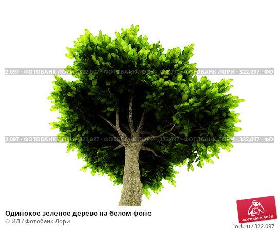Одинокое зеленое дерево на белом фоне, иллюстрация № 322097 (c) ИЛ / Фотобанк Лори