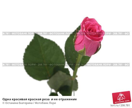 Одна красивая красная роза  и ее отражение, фото № 208781, снято 19 января 2008 г. (c) Останина Екатерина / Фотобанк Лори