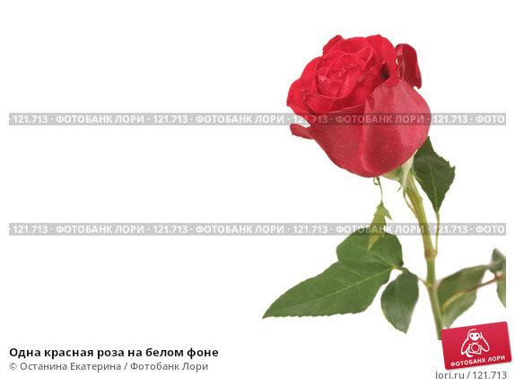 Одна красная роза на белом фоне, фото № 121713, снято 12 октября 2007 г. (c) Останина Екатерина / Фотобанк Лори