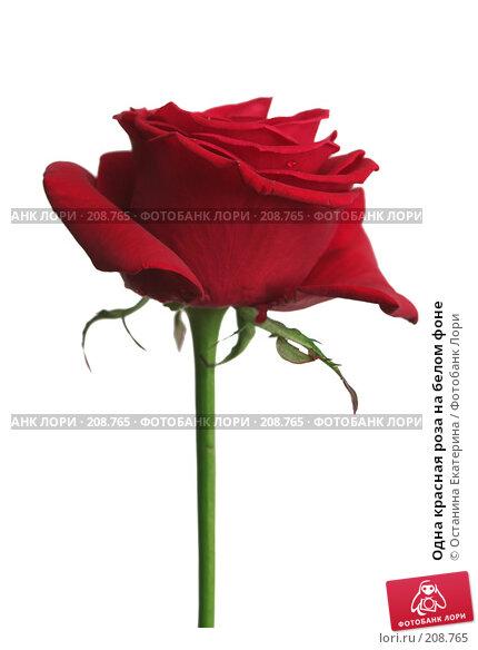 Купить «Одна красная роза на белом фоне», фото № 208765, снято 15 января 2008 г. (c) Останина Екатерина / Фотобанк Лори